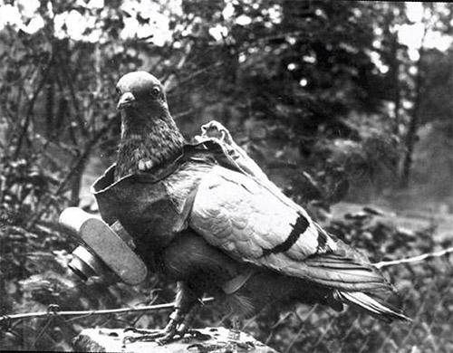 سرگذشت حیوانات در جنگجهـانی اول
