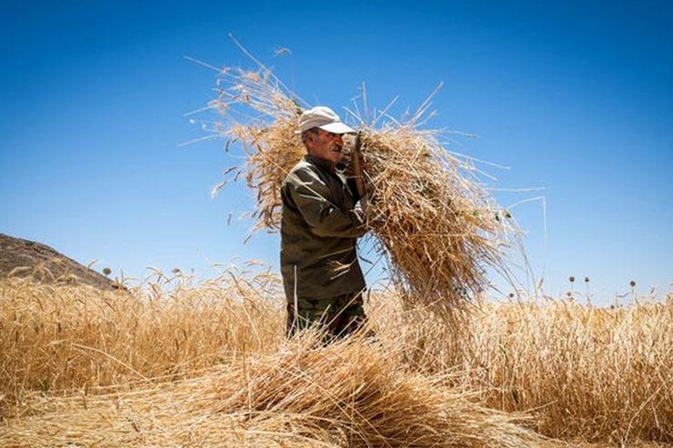 تیر خلاص تامیناجتماعی به معافیتهای بیمهای کشاورزی