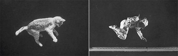 نقش سقوط گربهها در اکتشافات فضایی ناسا