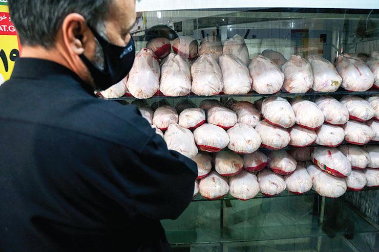 دلیل نوسانات قیمت مرغ در روزهای اخیر چیست؟ + فیلم
